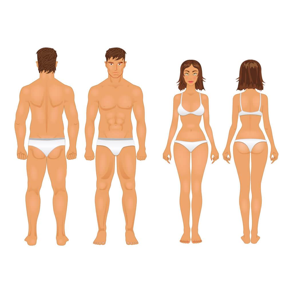 Férfi és női testalkat különbsége